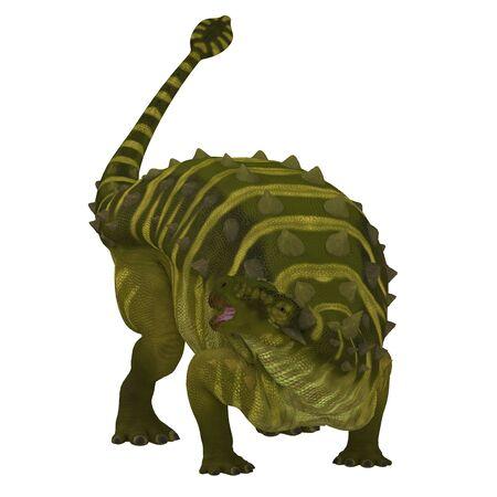herbivorous: Talarurus Dinosaur on White - Talarurus was a herbivorous ankylosaur that lived in Mongolia during the Cretaceous Period.