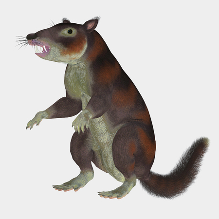 mammal: Cronopio Mammal on White - Cronopio was a squirrel-sized mammal that lived with the dinosaurs in the Cretaceous Period of Argentina, South America.