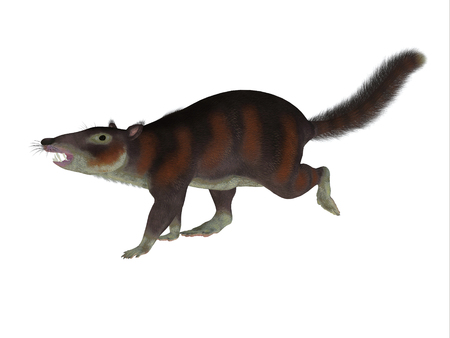 sized: Cronopio Mammal Side Profile - Cronopio was a squirrel-sized mammal that lived with the dinosaurs in the Cretaceous Period of Argentina, South America. Stock Photo