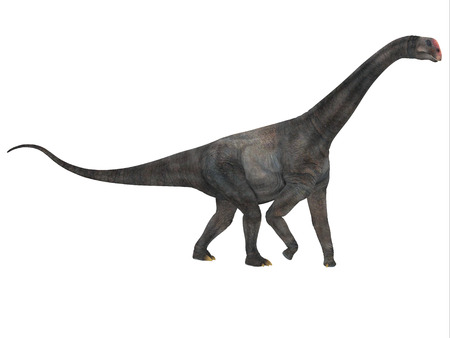 Brontomerus Side Profile - Brontomerus was a herbivorous sauropod dinosaur that lived in the Cretaceous Period of Utah, USA.