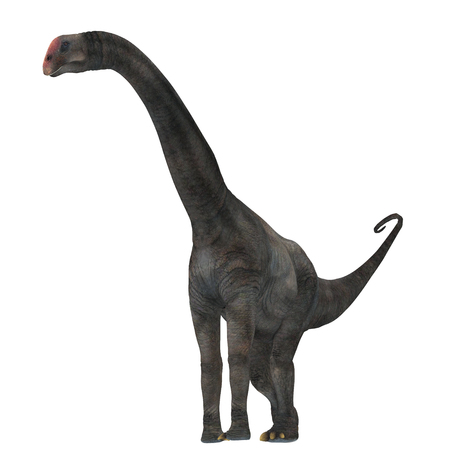 herbivorous: Brontomerus Dinosaur on White - Brontomerus was a herbivorous sauropod dinosaur that lived in the Cretaceous Period of Utah, USA. Stock Photo