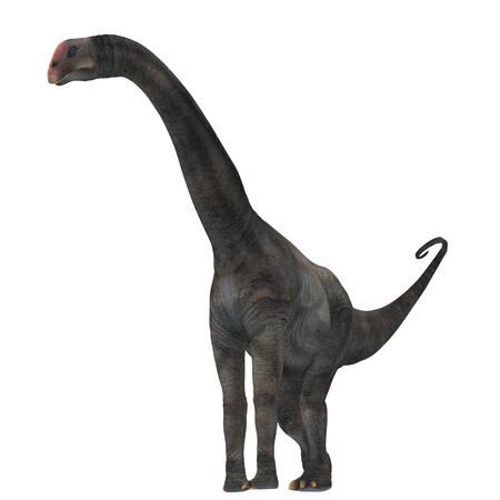 Brontomerus Dinosaur on White - Brontomerus was a herbivorous sauropod dinosaur that lived in the Cretaceous Period of Utah, USA. Stock Photo
