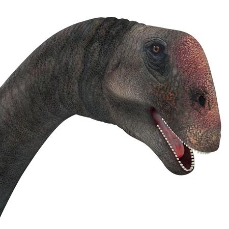 Brontomerus Dinosaur Head - Brontomerus was a herbivorous sauropod dinosaur that lived in the Cretaceous Period of Utah, USA.