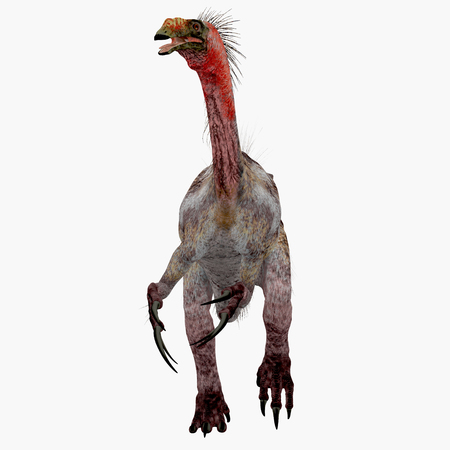 Therizinosaurus Dinosaur on White - Therizinosaurus was a carnivorous theropod dinosaur that lived in the Cretaceous Period of Mongolia.