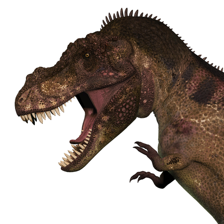 T-Rex Dinosaur Head - Tyrannosaurus Rex was a carnivorous dinosaur that lived in the Cretaceous Period of North America.