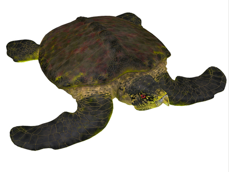 was: Archelon Turtle on White - Archelon was a giant marine turtle that lived in South Dakota, USA in the Cretaceous Period.