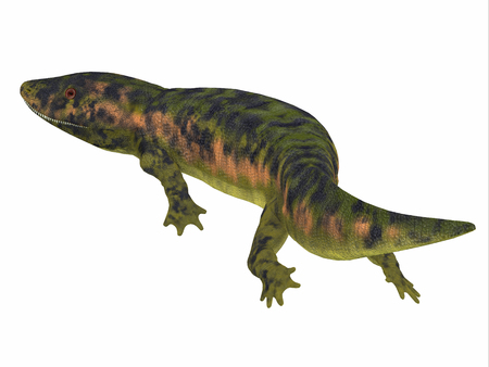 amphibious: Dendrerpeton Amphibian Tail - Dendrerpeton was an extinct genus of amphibious carnivore from the Carboniferous Period of Canada. Stock Photo