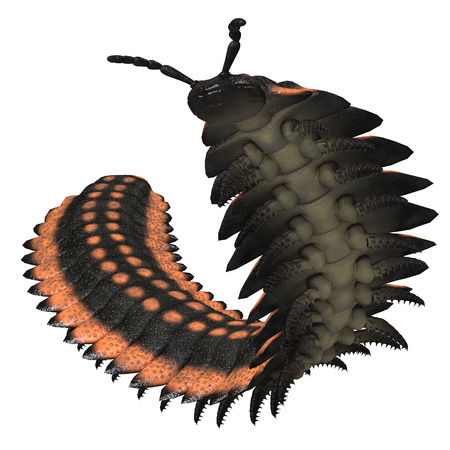 carboniferous: Arthropleura on White - Arthropleura was a giant insect invertebrate that lived in North America and Scotland during the Carboniferous Period.