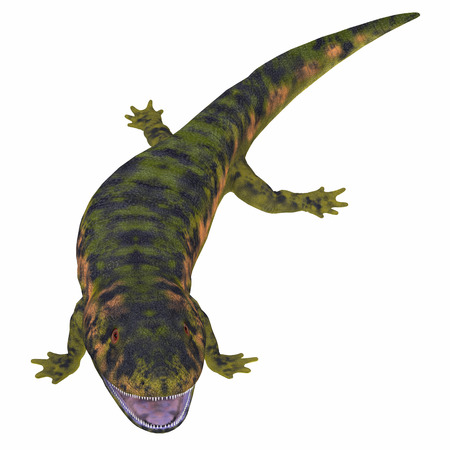 amphibious: Dendrerpeton Amphibian on White - Dendrerpeton was an extinct genus of amphibious carnivore from the Carboniferous Period of Canada.