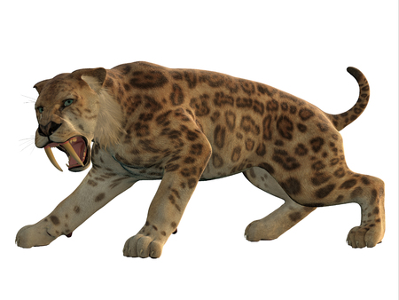 Saber-Tooth Cat Angry - Saber-Tooth Tiger was an extinct large carnivore that lived worldwide during the Eocene to Pleistocene Eras. Stock Photo