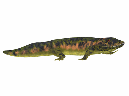 extinct: Dendrerpeton Amphibian Side View - Dendrerpeton was an extinct genus of amphibious carnivore from the Carboniferous Period of Canada.