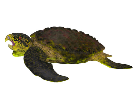 subtropical: Archelon Turtle Side View - Archelon was a giant marine turtle that lived in South Dakota, USA in the Cretaceous Period.