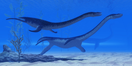 jurassic: Plesiosaurus Jurassic Reptiles - Plesiosaurus marine reptile dinosaurs swim together in Jurassic Seas to find their next prey.