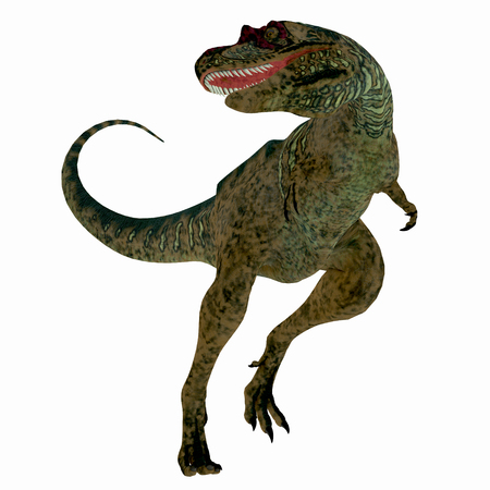 Albertosaurus Dinosaur on White - Albertosaurus was a theropod carnivorous dinosaur that lived in the Cretaceous Period of North America.