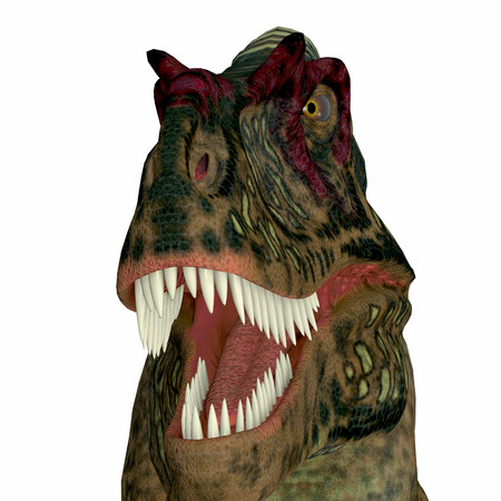 Albertosaurus Dinosaur Head - Albertosaurus was a theropod carnivorous dinosaur that lived in the Cretaceous Period of North America. Stock Photo