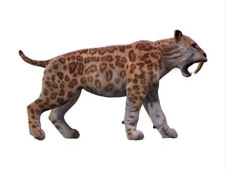 periods: Saber-toothed Cat Profile - The Saber-toothed Tiger lived worldwide in the Eocene to the end of the Pleistocene Periods.