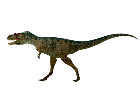 Albertosaurus Dinosaur Side Profile - Albertosaurus was a theropod carnivorous dinosaur that lived in the Cretaceous Period of North America.