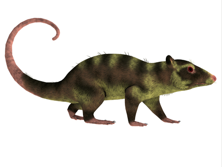 cretaceous: Purgatorius Primate Side Profile - Purgatorius is an example of the first primate that lived in Montana in the Cretaceous Period.
