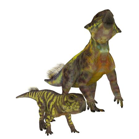 Psittacosaurus Dinosaurs on White - Psittacosaurus was a Ceratopsian herbivorous dinosaur that lived in Asia in the Cretaceous Period.