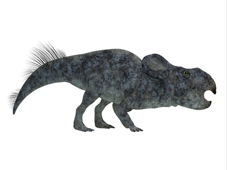 herbivorous: Protoceratops Dinosaur Side Profile - Protoceratops was a herbivorous Ceratopsian dinosaur that lived in Mongolia in the Cretaceous Period.
