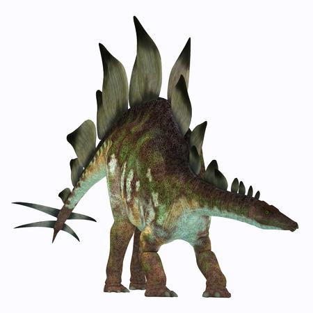 stegosaurus: Dinosaurio del Stegosaurus en el blanco - Stegosaurus era un dinosaurio herbívoro acorazado que vivieron en América del Norte durante el periodo Jurásico.