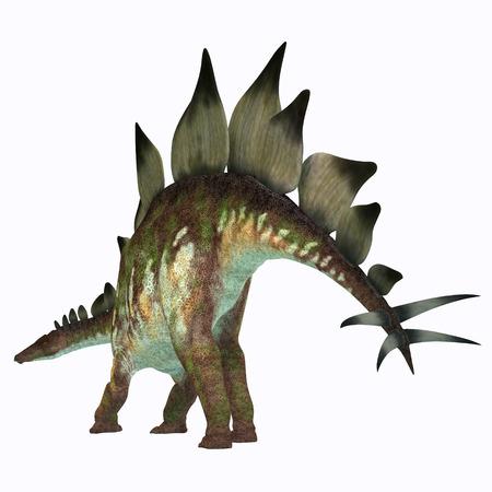 stegosaurus: Stegosaurus del dinosaurio de la cola - Stegosaurus era un dinosaurio herbívoro acorazado que vivieron en América del Norte durante el periodo Jurásico. Foto de archivo