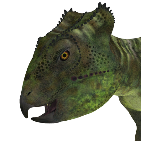 frill: Archaeoceratops Dinosaur Head - Archaeoceratops was a Ceratopsian herbivorous dinosaur that lived in China in the Cretaceous Period. Stock Photo