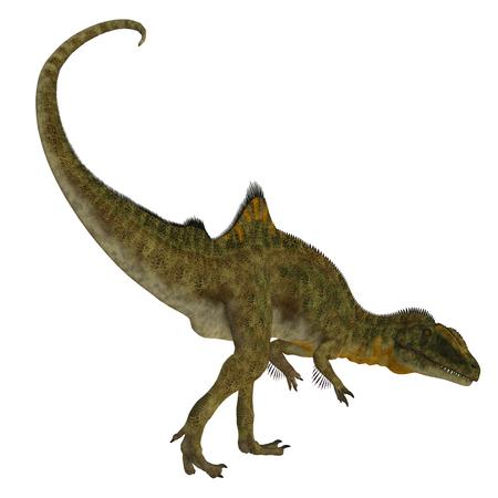 cretaceous: Concavenator Dinosaur Tail - Concavenator was a carnivorous theropod dinosaur that lived in Spain in the Cretaceous Period.