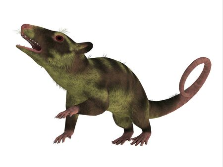 Purgatorius Primate on White - Purgatorius is an example of the first primate that lived in Montana in the Cretaceous Period. Stock Photo