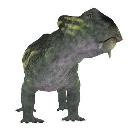 triassic: Lystrosaurus Dinosaur on White - Lystrosaurus was a dicynodont therapsid dinosaur that lived in the Permian and Triassic Periods of Antarctica, India, Africa, China, Mongolia and Russia. Stock Photo