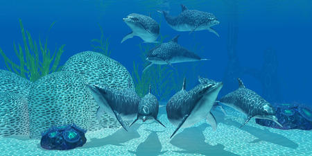 Dolphins Underwater - A pod of Bottlenose dolphins look for their next meal on a coral reef in clear tropical ocean waters.