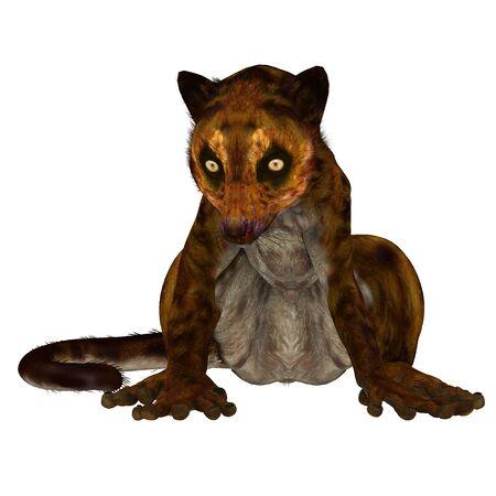 vertebrate animal: Darwinius Primate on White - Darwinius is lemur-like early primate that lived in the Eocene Period in Germany.