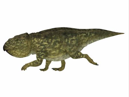 ブラキケラトプスは白亜紀にアル...