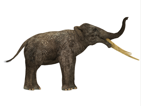 pachyderm: Stegotetrabelodon Side Profile - Stegotetrabelodon was an elephant that lived in the Miocene and Pliocene Periods of Africa and Eurasia. Stock Photo