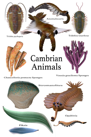 paleontology: Cambrian Animals - An assortment of some of the animals, sponges and microbes of the Cambrian seas of Earths history. Stock Photo