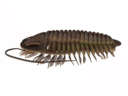 Trilobite ptychoparia Side Profile - Trilobite ptychoparia animal lived in the Cambrian seas of Eurasia and North America. Stock Photo