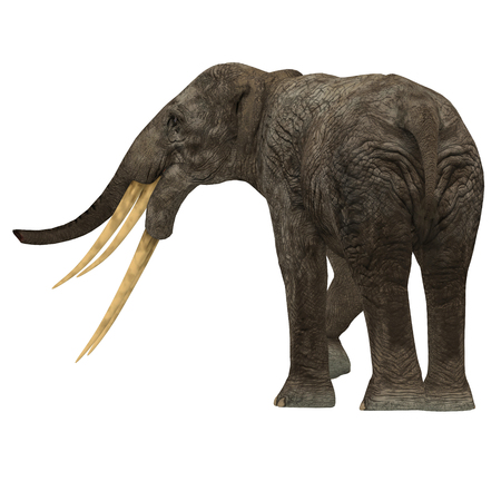primeval: Stegotetrabelodon Elephant Tail - Stegotetrabelodon was an elephant that lived in the Miocene and Pliocene Periods of Africa and Eurasia.