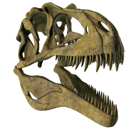 Acrocanthosaurus Dinosaur Skull - Acrocanthosaurus was a carnivorous theropod dinosaur that lived in North America in the Cretaceous Period. Stock Photo