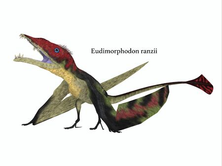 triassic: Eudimorphodon Resting with Font - The carnivorous Eadimorphodon was a pterosaur flying reptile that lived in Italy in the Triassic Period. Stock Photo