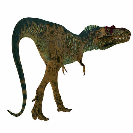 Albertosaurus Dinosaur Tail - Albertosaurus was a carnivorous theropod dinosaur that lived in North America in the Cretaceous Period. Stock Photo