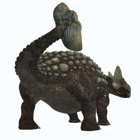 Ankylosaurus Dinosaur Tail - Ankylosaurus was a herbivorous armored dinosaur that lived in North America in the Cretaceous Period.