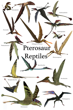 pterosaur: Pterosaur Reptiles - A collection of various Pterosaur reptiles from different prehistoric periods of Earths history.