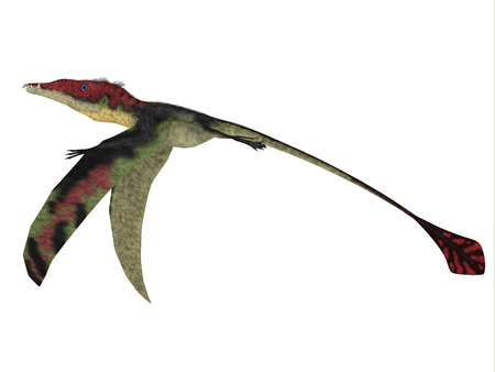 Eudimorphodon Wings Down - The carnivorous Eadimorphodon was a pterosaur flying reptile that lived in Italy in the Triassic Period.