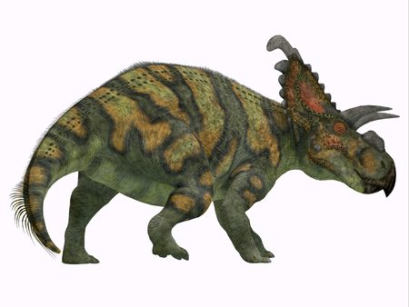 alberta: Albertaceratops Dinosaur Tail - Albertaceratops was a herbivorous Ceratopsian dinosaur that lived in Alberta, Canada in the Cretaceous Period.