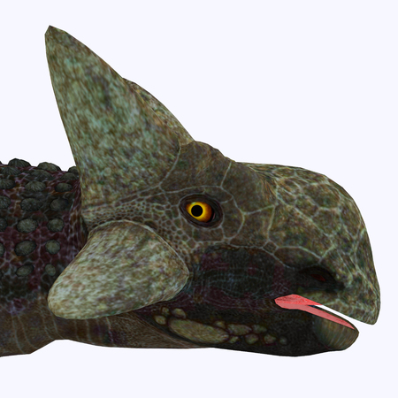 was: Ankylosaurus Dinosaur Head - Ankylosaurus was a herbivorous armored dinosaur that lived in North America in the Cretaceous Period.