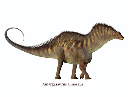 Amargasaurus Side Profile with Font - Amargasaurus was a herbivorous sauropod dinosaur that lived in Argentina in the Cretaceous Period.