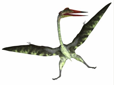 Quetzalcoatlus Reptile on White - Quetzalcoatlus was a carnivorous pterosaur reptile that lived in the Cretaceous Period of North America.