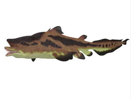 Edestus Shark - Edestus shark lived in seas of the Carboniferous Period in North America, England and Russia.