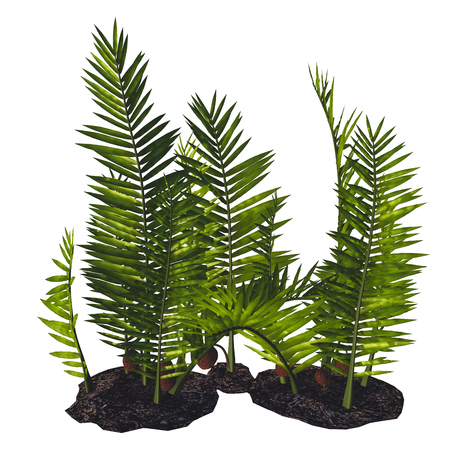 cretaceous: Nipa burtinii Plants - Nipa started out in the Cretaceous Period and live today in swamps, river borders and humid areas. Stock Photo