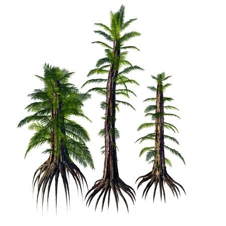 Tempskya sp Trees - Tempskya is an extinct genus of tree-like fern that lived during the Cretaceous Period. Reklamní fotografie